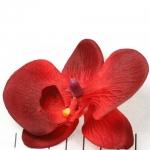 orchidee bloem - rood
