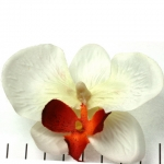 orchid flower - off white with red