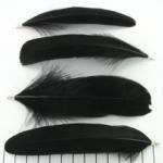 veer 14 cm - zwart