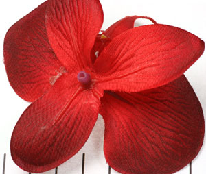 Extra foto's orchidee bloem - rood